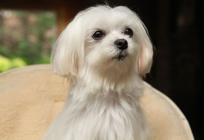 Trimsalon Nini – Westrozebeke - Trimmen honden