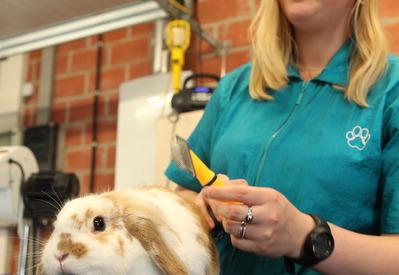 Trimsalon Nini – Westrozebeke - Trimmen cavia's & konijnen